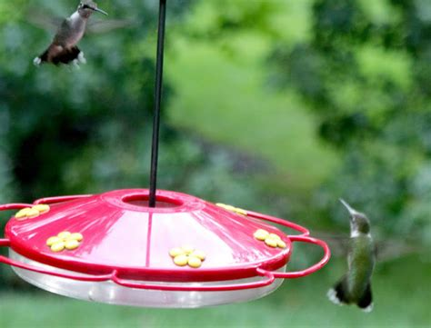 Why Do Hummingbirds Stop Coming To Feeders why do hummingbirds stop coming to feeders wiring diagrams wiring diagrams