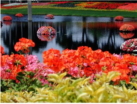 flower gardens in orlando beautiful and colorful flowers at epcot flower garden in