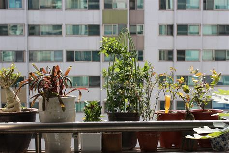 veranda tree free photo potted plant apartments veranda free image