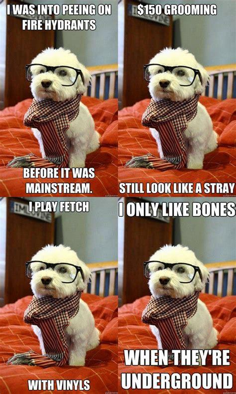 Hipster Dog Meme - hipster dog entirelypets
