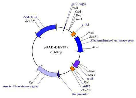 meaning of layout tools simvector a plasmid drawing software