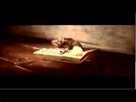 nolans cheddar mouse commercial nolan s cheddar cheese commercial youtube