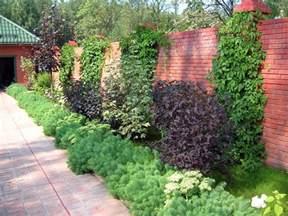 terrasse pflanzen welche pflanzen als sichtschutz f 252 r garten und terrasse