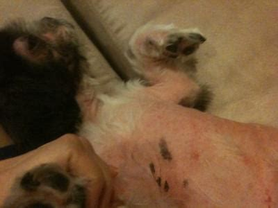 black skin on dogs dots s armpit area with black scaly looking skin without hair part 2