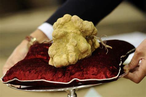 italian truffle white gold a look at the 2012 italian truffle trade