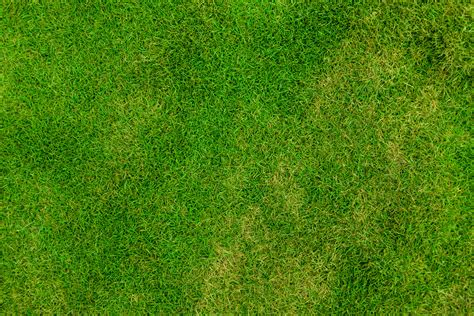 Image Pattern Grass | grass pattern free stock photo public domain pictures