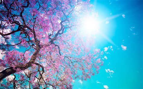 sfondi desktop fiori di primavera sfondi primavera hd fiori di pesco sfondi hd gratis