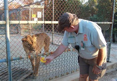 Mainan Bebek Teman Mandi lucunya singa ini penasaran dengan bebek karet
