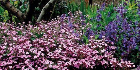 fiori perenni tappezzanti piante tappezzanti per giardino cose di casa