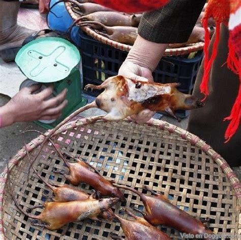 imagenes ratas asquerosas deliciosas ratas en cocina vietnamita dogguie