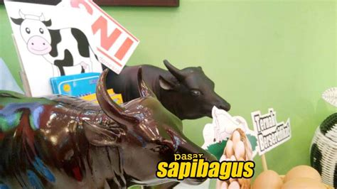 Bibit Sapi Aceh pentingnya sertifikasi ternak untuk usaha pembibitan sapi