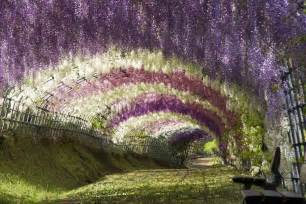 Flower Tunnel wisteria tunnel feel desain