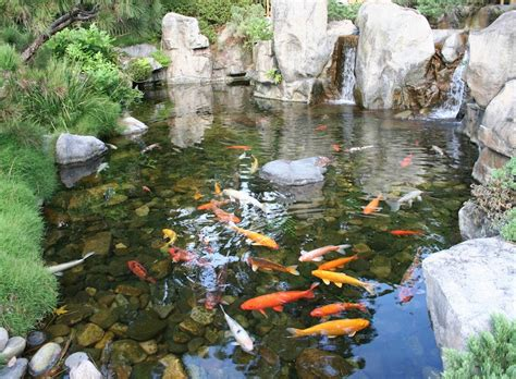 backyard fish pond ideas fish for backyard pond pool design ideas