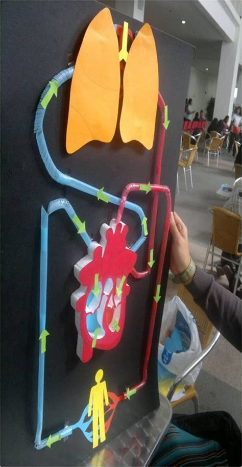 Two Simple Home Made Aids For Your best 25 circulatory system ideas on