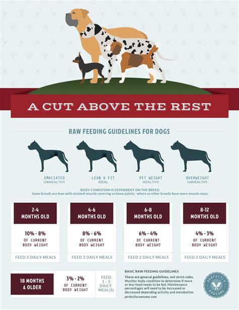 puppy feeding guidelines free feeding downloads