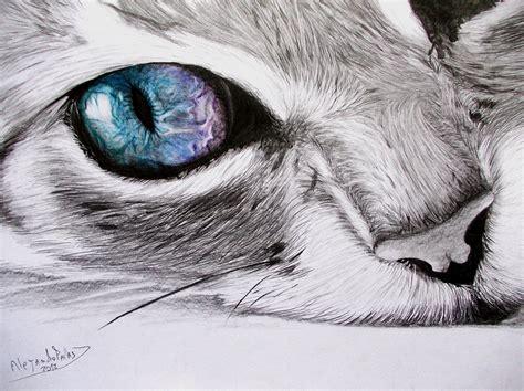 imagenes a lapiz de gatos 10 dibujos a l 225 piz de gatos dibujos a lapiz