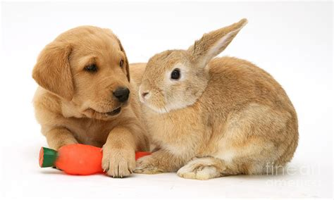 bunnies and puppies rabbit and puppy by burton