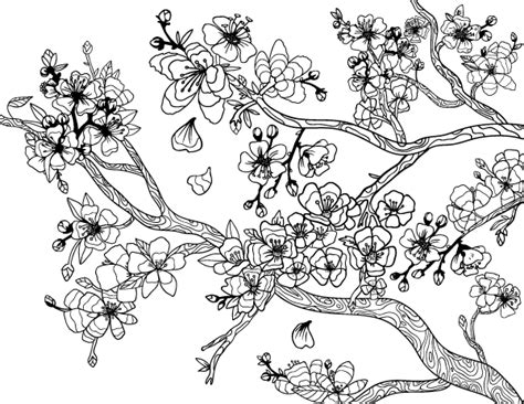cherry blossom coloring pages cherry blossom coloring page