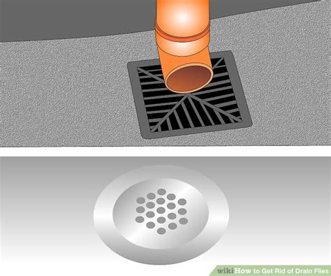 how to get rid of drain flies in the bathroom how to get rid of drain flies 14 steps with pictures