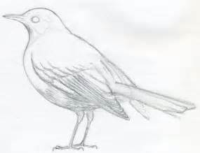 How To Draw Bird How To Draw A Bird Jus 4 Kidz