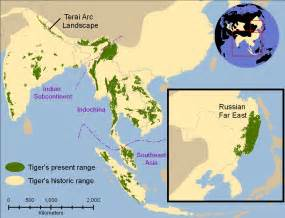 tiger map amazing facts about tigers