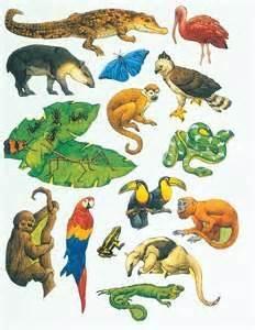 Rainforest animals rainforest jungle animals educ art animals
