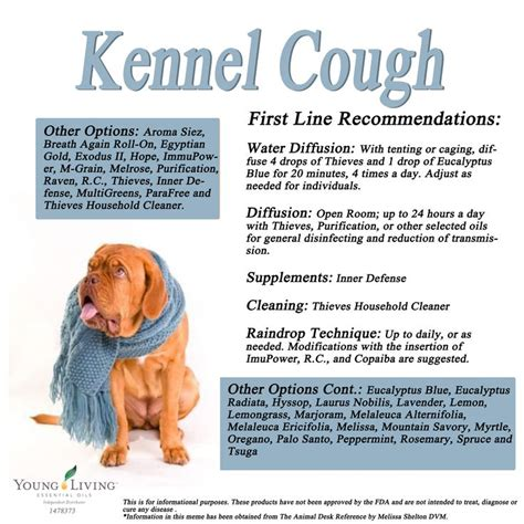 kennel cough in dogs living essential oils canine kennel cough protocol
