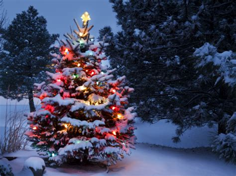 weihnachtsbaum schneit students sign petition to ban racist white song