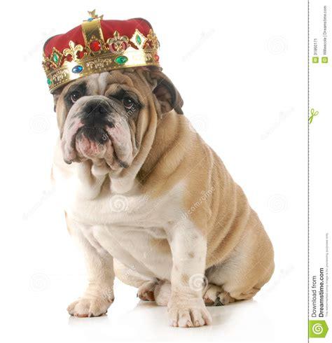 king dogs wearing crown stock image image 31860171