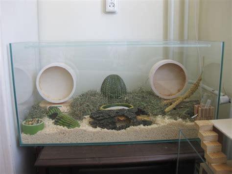 Kandang Set 10 best images about hamster aquarium on