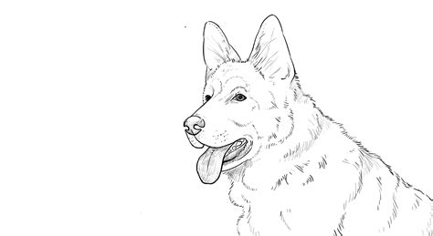 how to draw a german shepherd how to draw german shepherd
