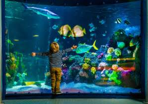Aquarium by Tickets To Sea Life Grapevine Buy Online Amp Save