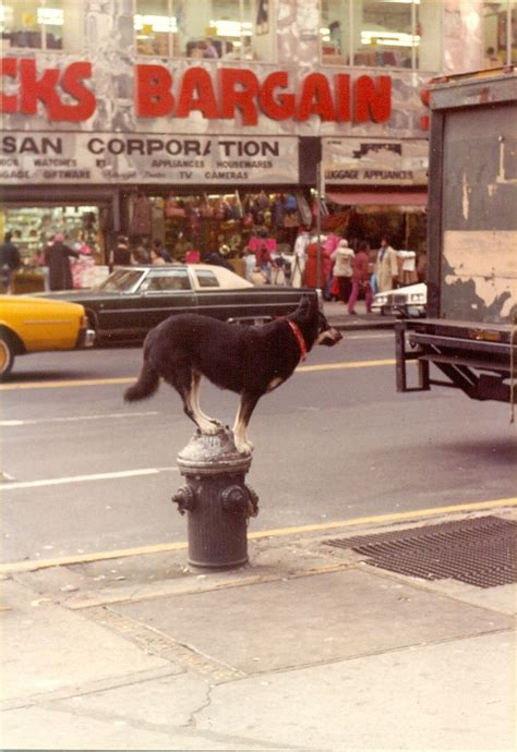places to walk dogs near me new york 1982 1983 before big money buried the city s character flashbak