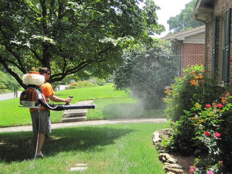 best mosquito control for backyard mosquito control
