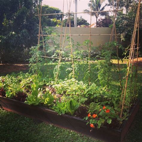 194 Best Florida Garden Images On Pinterest Florida Vegetable Gardening