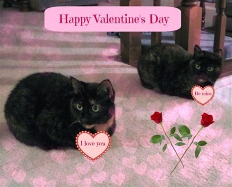 happy valentines day cat happy s day the conscious cat