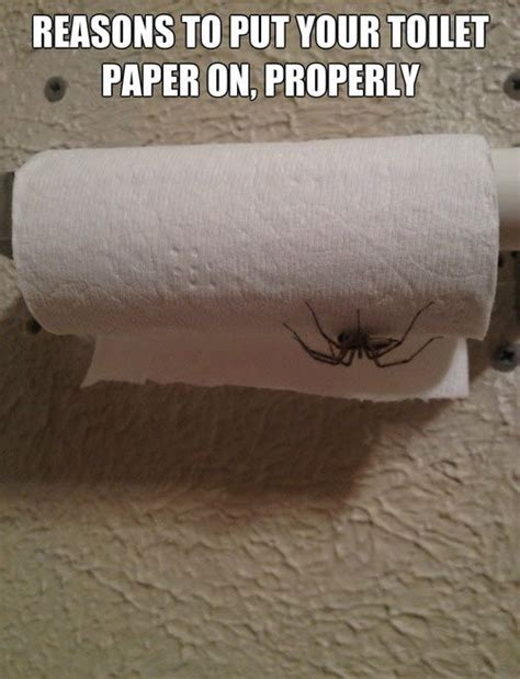 Toilet Paper Roll Meme - toilets toilet paper and spider on pinterest