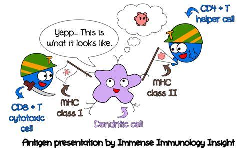 antigen presentation dendritic cell www my immunology