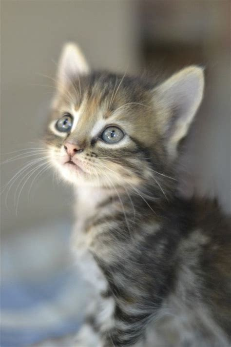 beautiful kittens cute little kitten cats photo 36360540 fanpop