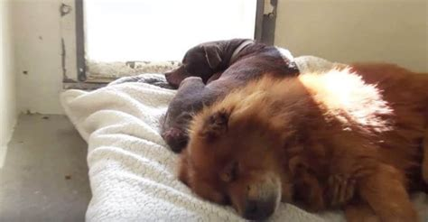 carson shelter dogs adorable best friends at shelter stopped because they were separated heroviral