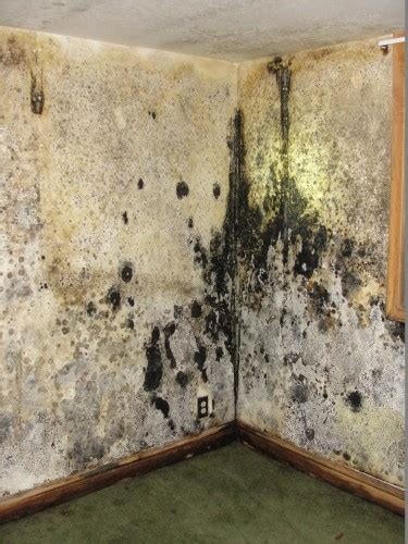 should i buy a house that has mold should i buy a house that has mold 28 images how to get rid of mold in the