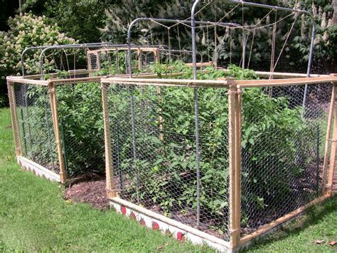7 Ways To Keep Squirrels From Eating Your Tomatoes Mnn Squirrels In Vegetable Garden