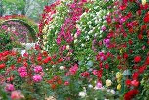 rose garden design planning a rose garden
