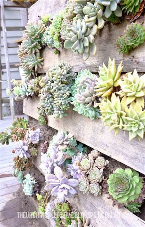 Best Succulents For Vertical Garden Creative Indoor And Outdoor Succulent Garden Ideas 2017