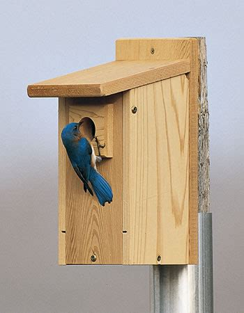 where to place bluebird house eastern bluebird house