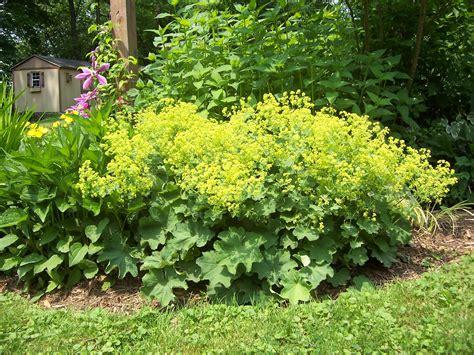 deer resistant plants the gardeners coach