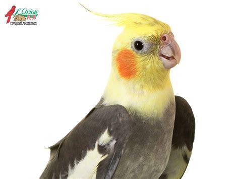 avian l for birds cockatiel l avian plusl avian plus