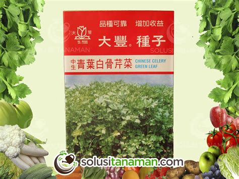 Harga Bibit Daun Seledri seledri celery 10g bibit benih tanaman sayur