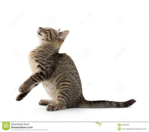 Cute tabby kitten stock photo. Image of adorable, mammal
