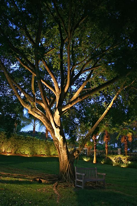 tree light outdoor lighting trees home decoration